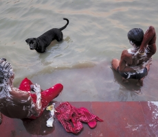 Men and animal beating the heat, at a ghat of The Ganga, after a hot day at Kolkata.