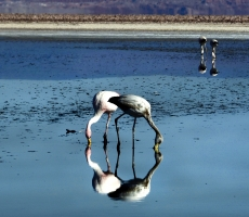 Reflections of Atacama