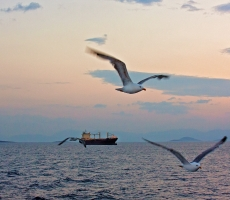 cargo ship and seagulls