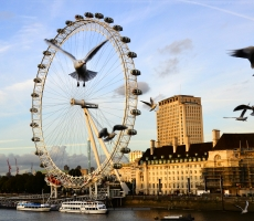 CTK London Eye Seagull