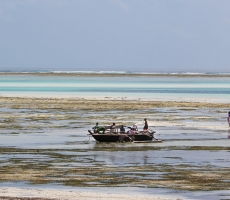 locals play in the Indian Ocean, East Zanzibar island.<br />